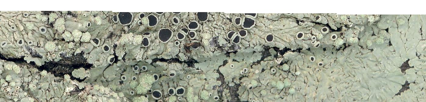 Find Lichen Estate