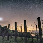 Starry Sky Above the Vineyard